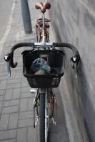 Natooke Bikes 2011 0842.JPG